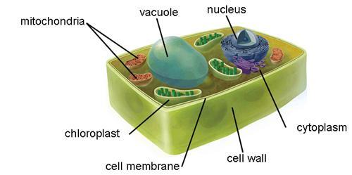 5th grade osborne kim science plant cell plant cell publicscrutiny Choice Image