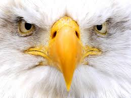 Eagle is Watching You!!