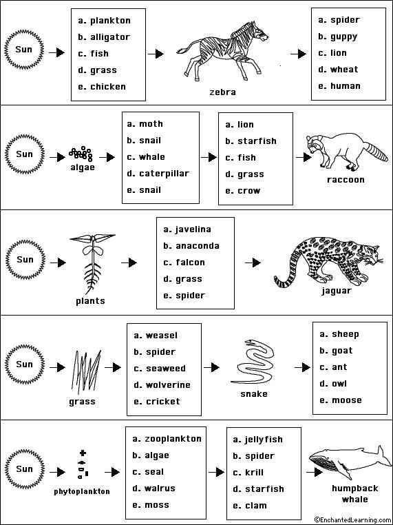 Printables Energy Flow In Ecosystems Worksheet worksheets trophic levels worksheet laurenpsyk free 1000 images about energy pyramids and food webs on pinterest ecological pyramid chains photosynthesis worksheets