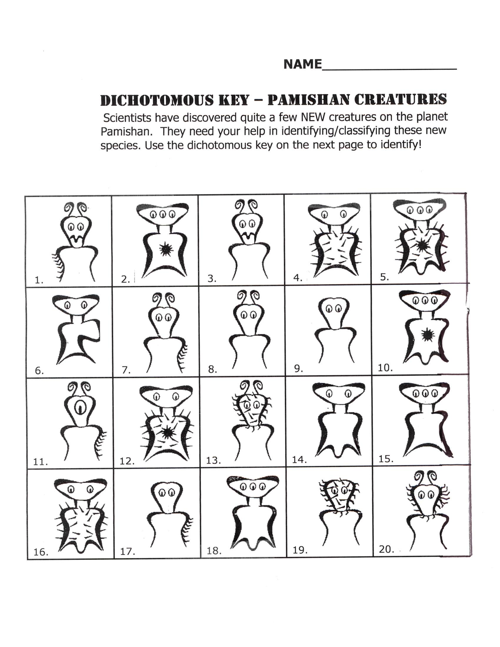 Uncategorized Dichotomous Key Worksheets behr john biology chapter 17 a key to new pamishan creatures