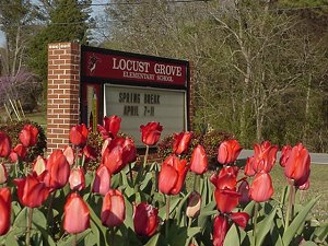 LGE sign and tulips